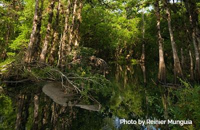 Green-Swamp