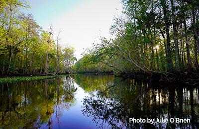 TheNaturalOcklawaha RiverPhotobyJulieO'Brien