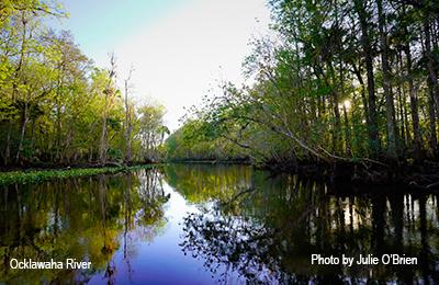 TheNaturalOcklawaha-RiverPhotobyJulieO'Brien