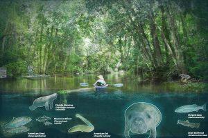 Manatee and fish habitat