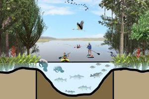 Ocala to Osceola wildlife corridor